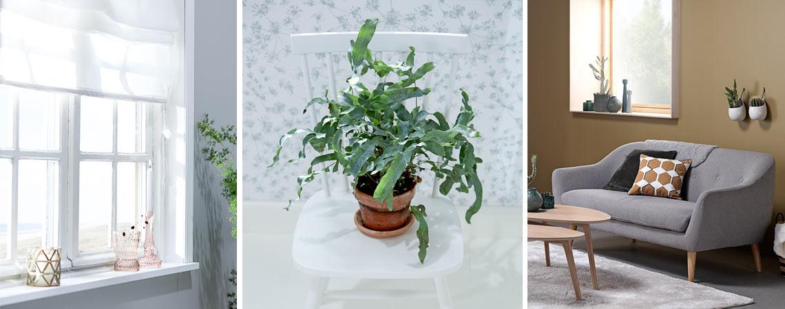 Moderne Feng shui-indretning: Sådan indretter du med feng shui | JYSK LY14